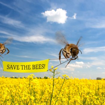 The Decline of the Bees